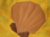 Zwiebelmuschel